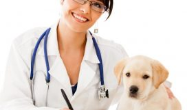 1428050188_big_vybor_veterinara_i_vetkliniki_13555810691-1